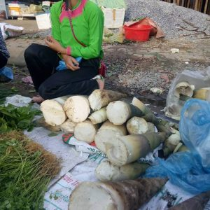 Người Mông hái măng rừng mang xuống chợ phiên Bắc Yên
