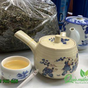 cây trà shan tuyết cổ thụ, được hái thủ công