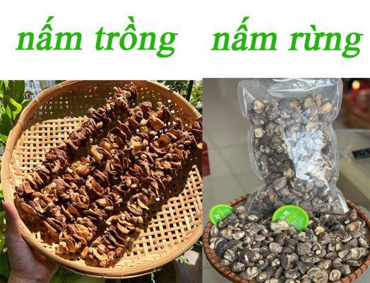 phân biệt nấm rừng và nấm trồng