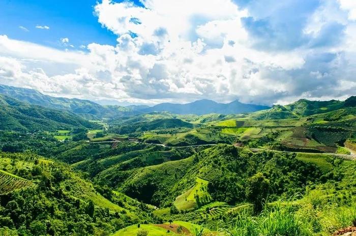 Sơn La có nhiều cánh rừng thích hợp cho cây dổi nếp phát triển